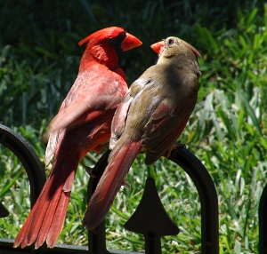 two-cardinals