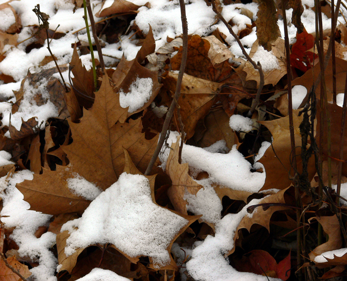 The Seasons Hope